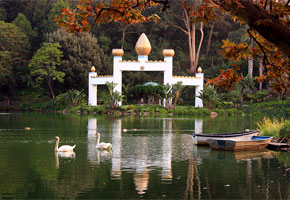 Golden Lotus Temple and swans | Photo courtesy of Self Realization Fellowship Lake Shrine